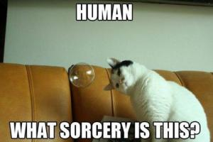 funny-animal-pictures-cat-memes-just-like-cat-funniest-animals-cat-fun-cat-funny-cat-cats-ca.jpg