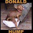 DonaldHump